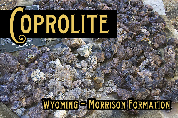 Coprolite for Sale - Wyoming Morrison Formation