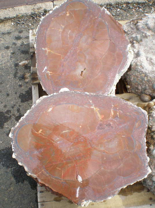 Oregon Orbicular Jasper