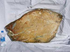 30-inch-slab Oregon picture jasper