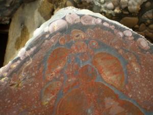 Oregon Orbicular Jasper