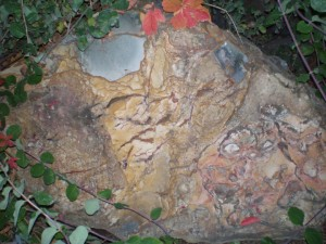 Oregon picture jasper