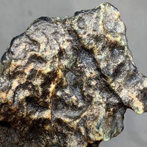 Turtleback - Bull Canyon Wyoming nephrite jade wind slicked specimen